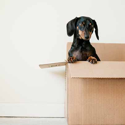 Removals London represented by a dog peeking out of a box